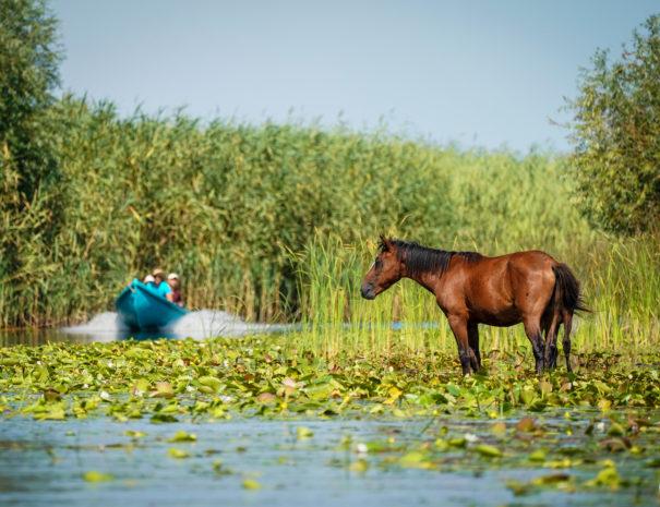 Letea Wild Horses in Danube Delta Romania